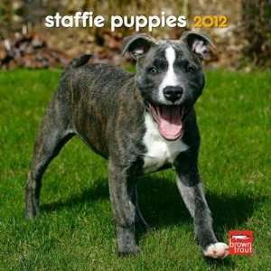Staffordshire Bull Terrier Puppies 2012 Small Wall
